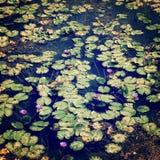 池塘的表面上的睡莲叶- retor过滤器 库存图片