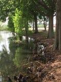 池塘的银行 免版税图库摄影