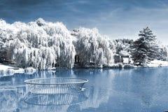 池塘的Infrafed照片 免版税库存图片