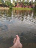 池塘看法  免版税库存照片