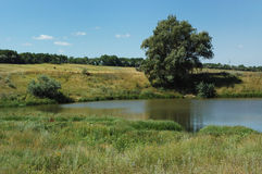 池塘结构树 免版税库存图片