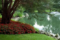 池塘结构树 库存照片