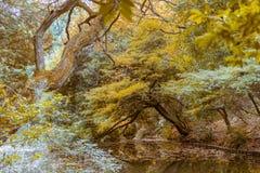 池塘美丽的景色在秋天期间的日本庭院里 免版税库存图片