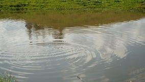 池塘英尺长度4k的表面上的水波 股票录像