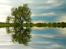 池塘被反射的结构树微明 库存照片