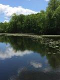 池塘视图 免版税库存图片
