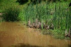 池塘边缘 库存照片