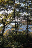 池塘通过树 库存照片