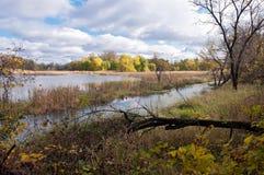 池塘避难所沼泽和森林地  图库摄影
