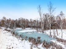 池塘,冬天,草,雪的冻海岸 库存照片