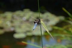池塘 免版税图库摄影