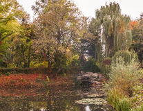 池塘 库存图片