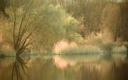 池塘 库存照片