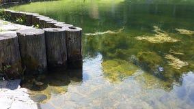 池塘08 库存图片