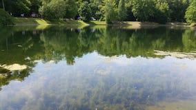 池塘10 库存图片