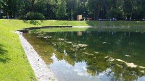 池塘13 图库摄影