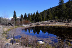 池塘 图库摄影