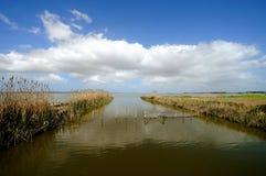 池塘Cabras -撒丁岛�意大利 免版税库存照片