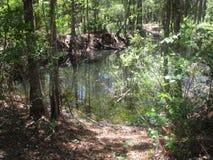 池塘reflectin树在森林里 图库摄影