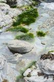 池岩石 库存照片