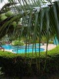 水池通过棕榈树 免版税库存图片