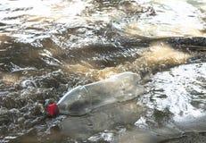 污染在海洋和河 库存图片
