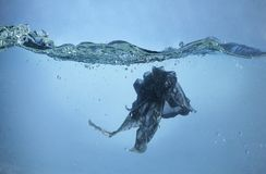 污染问题-塑料袋在海洋 免版税库存照片