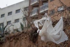 污染 塑料袋垂悬一个分支有城市背景, 库存照片