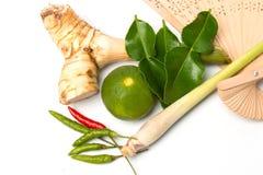 汤姆辣汤传统泰国食物cuis草本成份  免版税库存图片