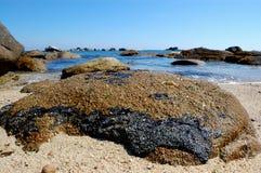 汽油,重质燃料,从海洋的油污染 库存照片