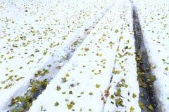 汽车保护者在雪和下落的绿色叶子的 免版税库存图片