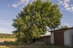 汽车和绿色树的车库 郊区 夏天 免版税库存照片