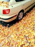 汽车和金黄槭树叶子 库存照片