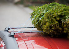 汽车圣诞节屋顶结构树 免版税图库摄影