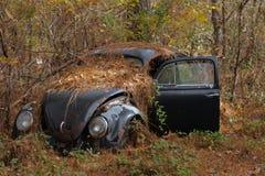 汽车在森林3 免版税库存图片