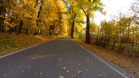 汽车驱动在与秋天的秋天上色了树 股票录像