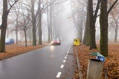 汽车骑马通过大高大的树木胡同在秋天在一个有雾的早晨 免版税库存图片
