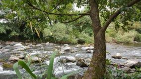 沈默自然河桥梁 库存图片