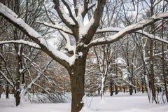 沉思平静的冬日在多雪的城市公园 库存图片