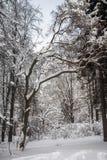 沉思平静的冬日在多雪的城市公园 库存照片