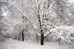 沉思惨淡的冬天早晨在多雪的乡下 免版税库存照片