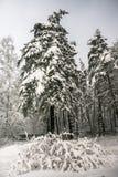 沉思惨淡的冬天早晨在多雪的乡下 免版税图库摄影