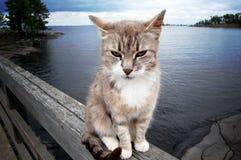 沉思猫 库存照片