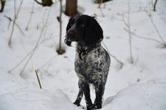 沉思的狗 图库摄影
