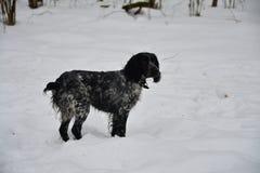 沉思的狗 免版税库存图片