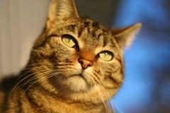 沉思的猫 库存照片