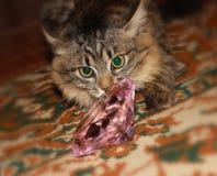 沉思虎斑猫 免版税库存照片