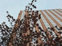 阴沉的天空,被举的叶子 免版税库存照片