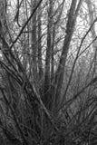 阴沉的森林 免版税库存图片