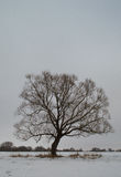阴沉的结构树 库存图片